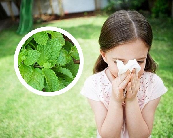 chữa viêm mũi dị ứng bằng lá cây